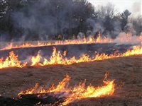 Burning and Soil Quality